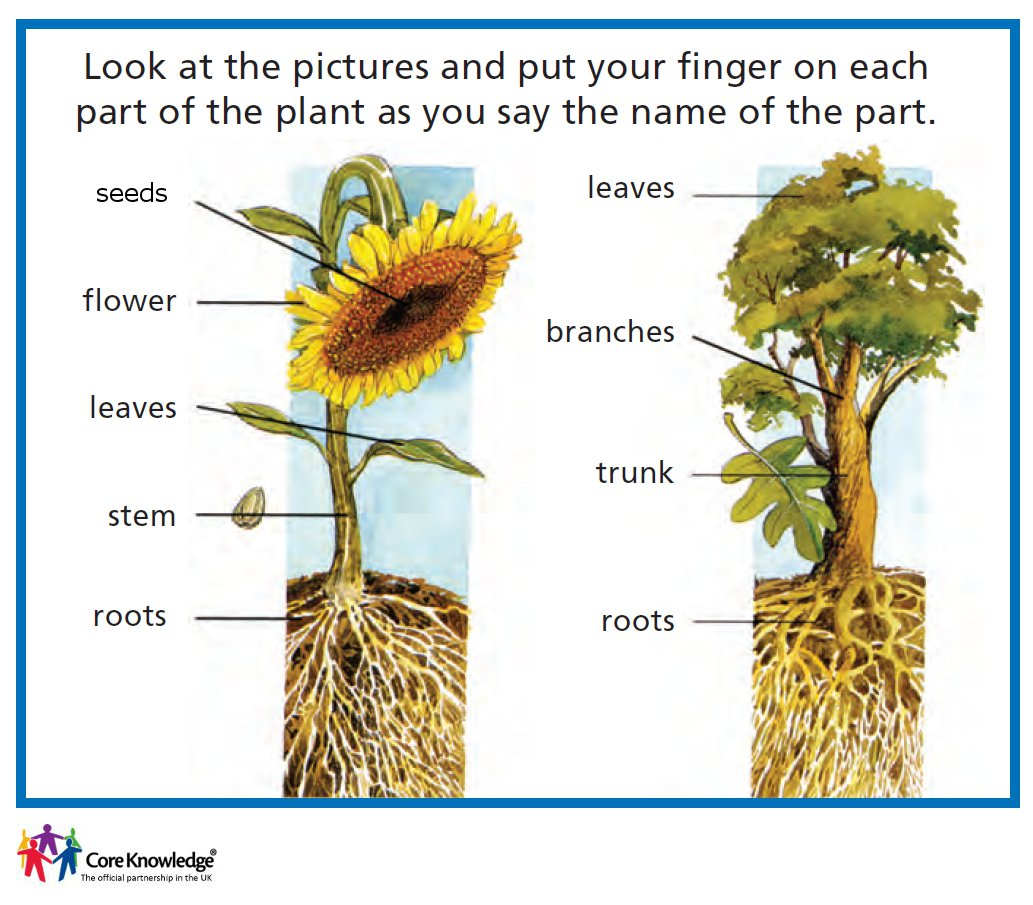 Cartoons Of Parts Of A Plant Pictures to Pin on Pinterest ...