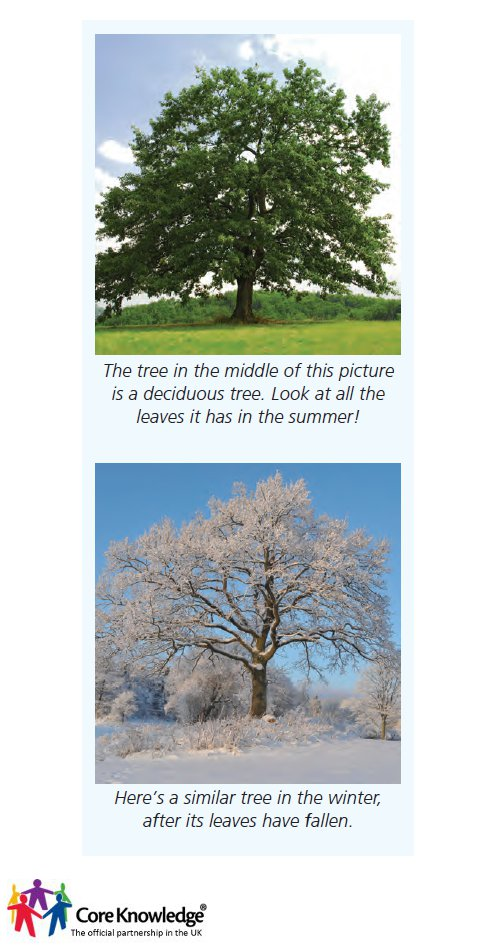 two types of trees